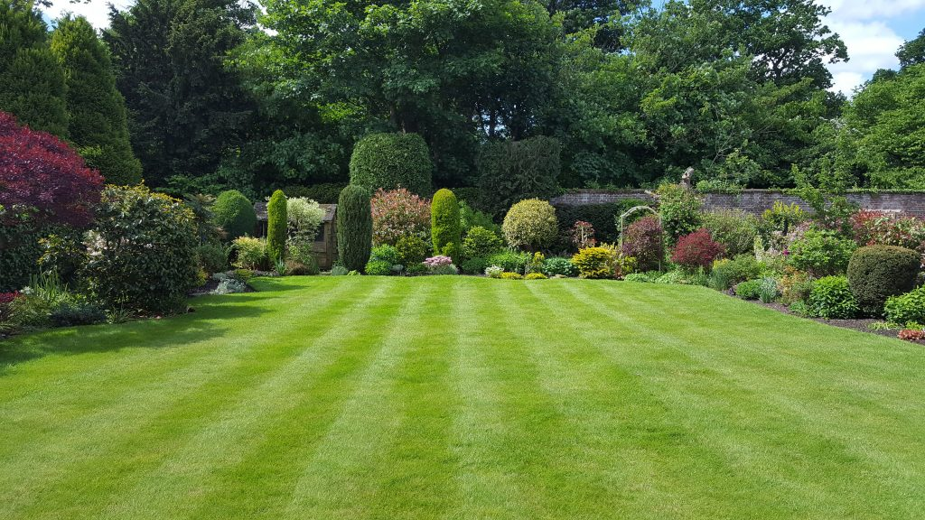 local-lawn-mowing-near-me-maidstone-kent