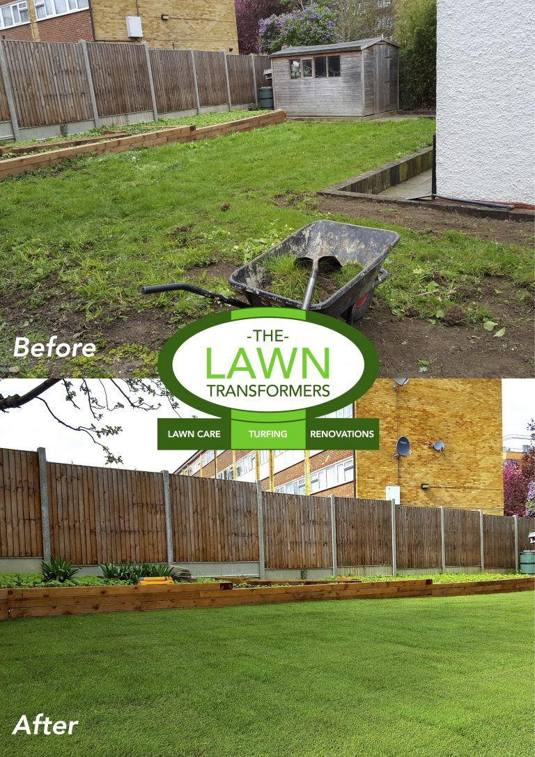 Weedy-lawn-replacement-Kent