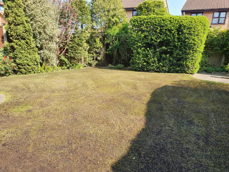 lawn-renovation-over-seeding