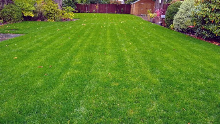 Lawn-care-company-lawn-weed-treatments-moss-treatments-Maidstone-Kent-ME14-ME15