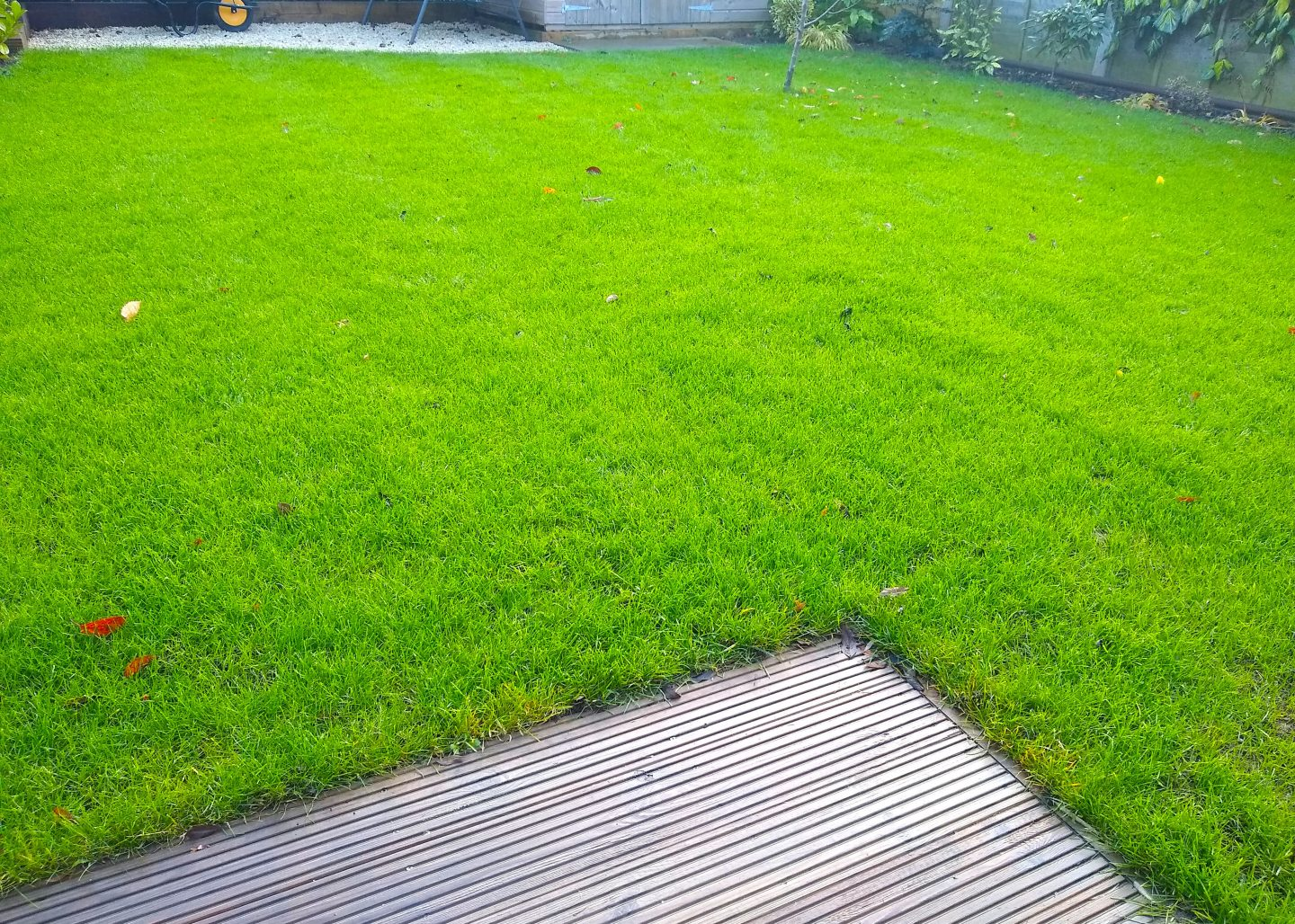 maidstone-lawn-renovation-after-4 weeks