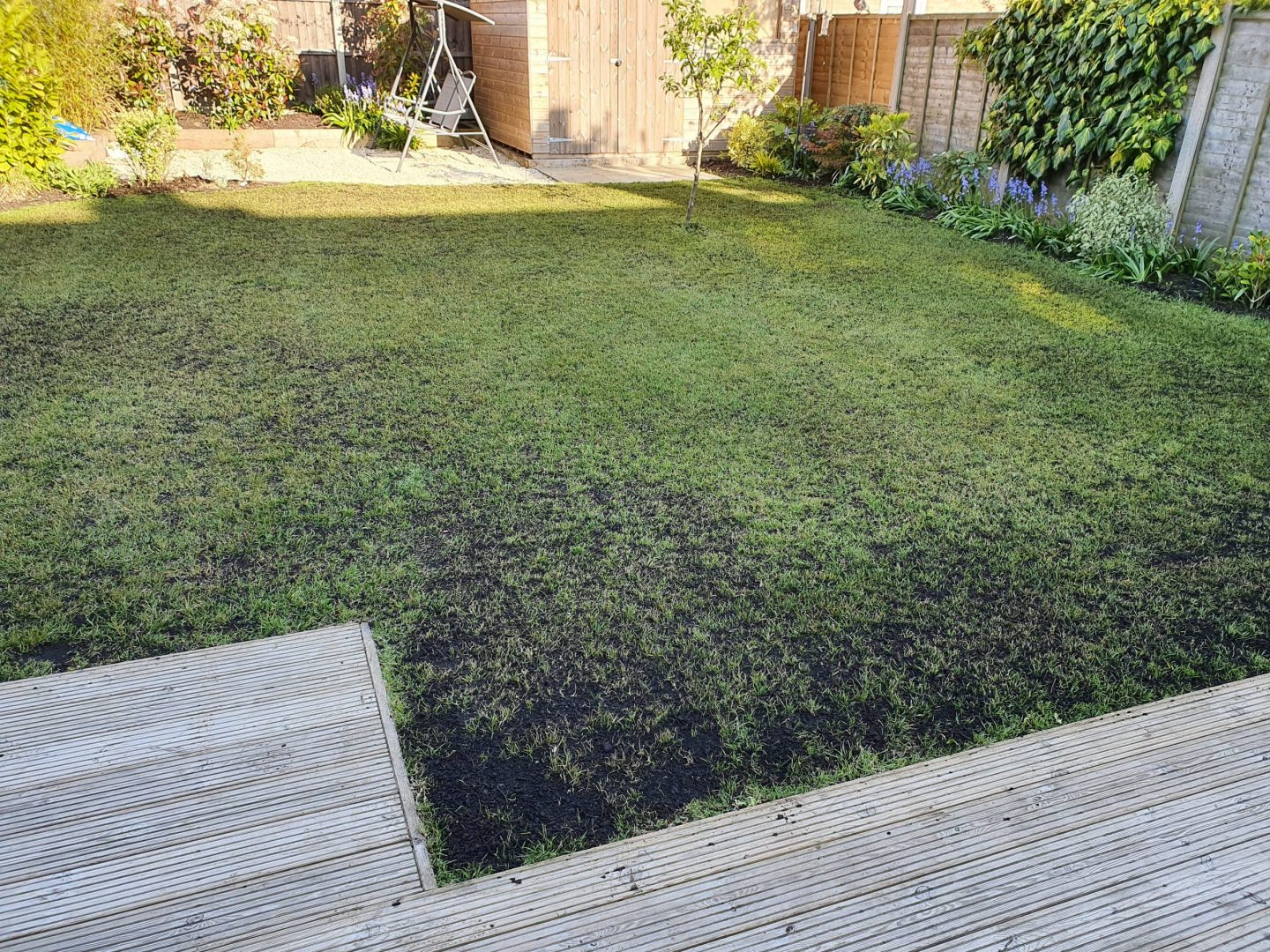 lawn-top-dressing-kent